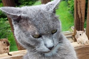 猫耳触り耳障り