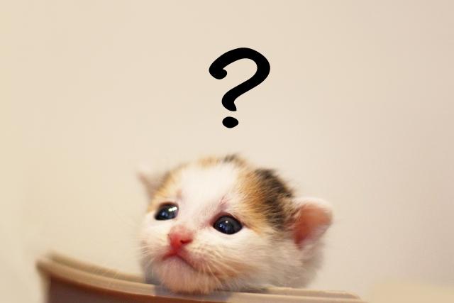 猫ネコハテナクエスチョンマーク